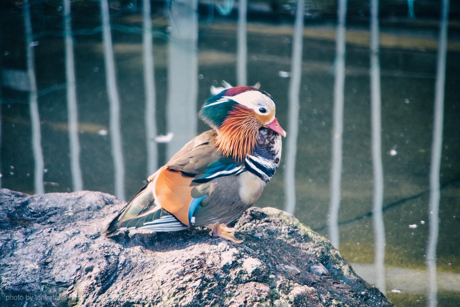 堀内公園 鳥