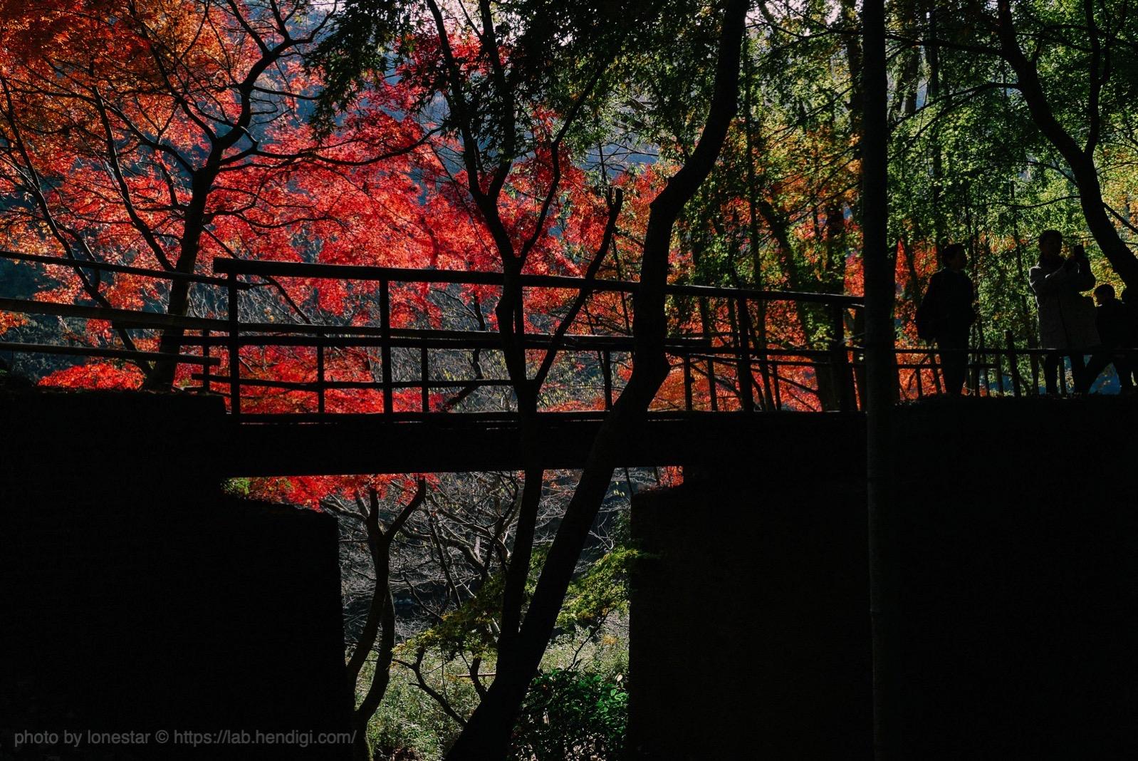 愛岐トンネル 紅葉