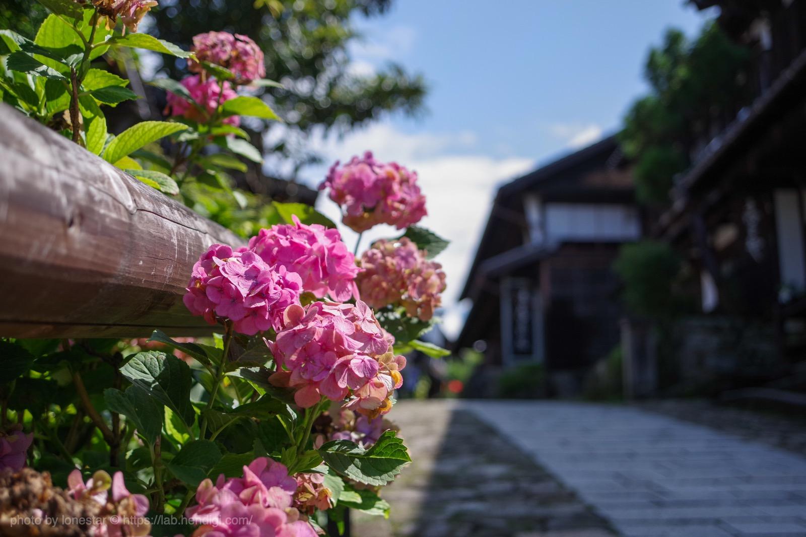 馬籠宿 紫陽花