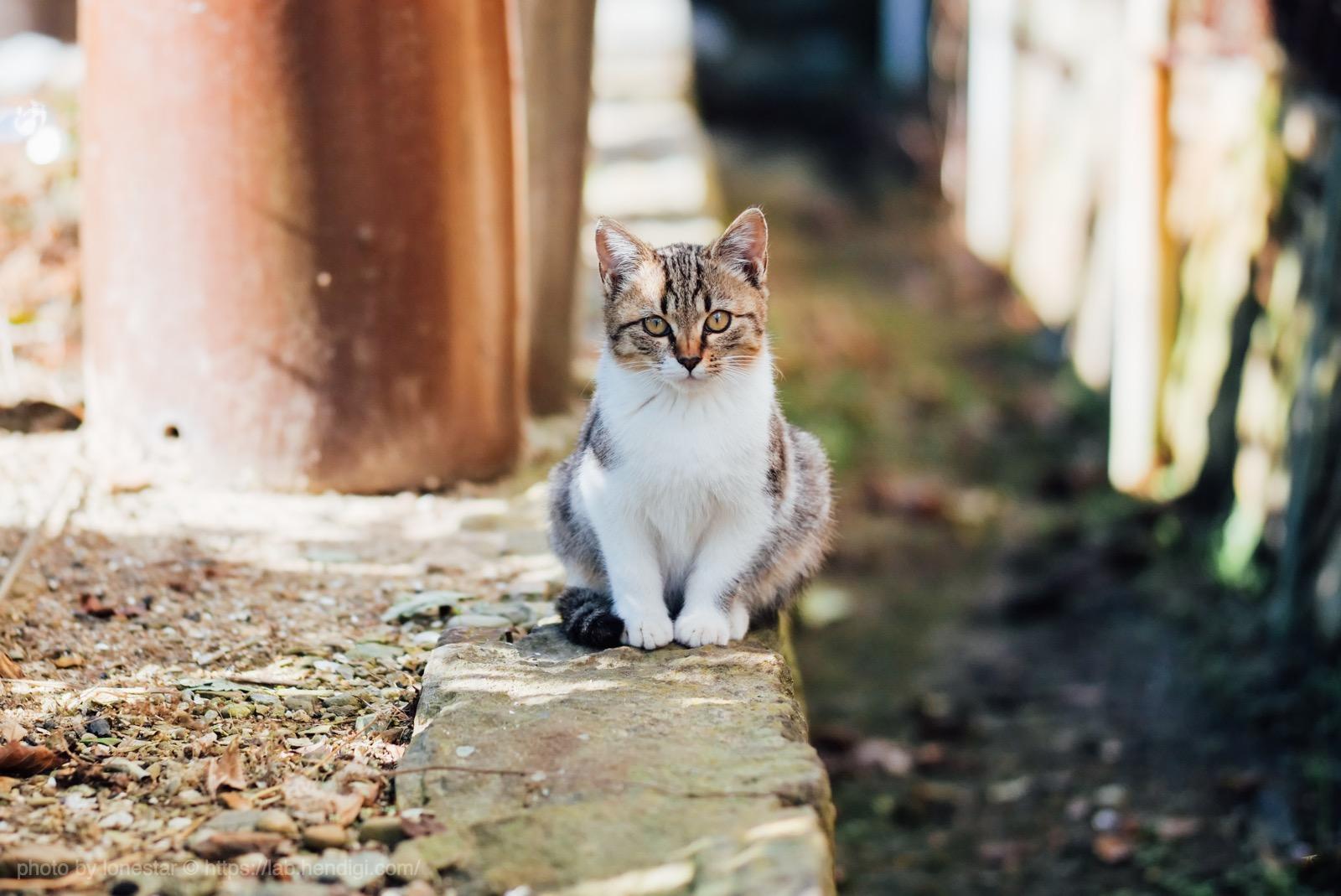 佐久島 猫