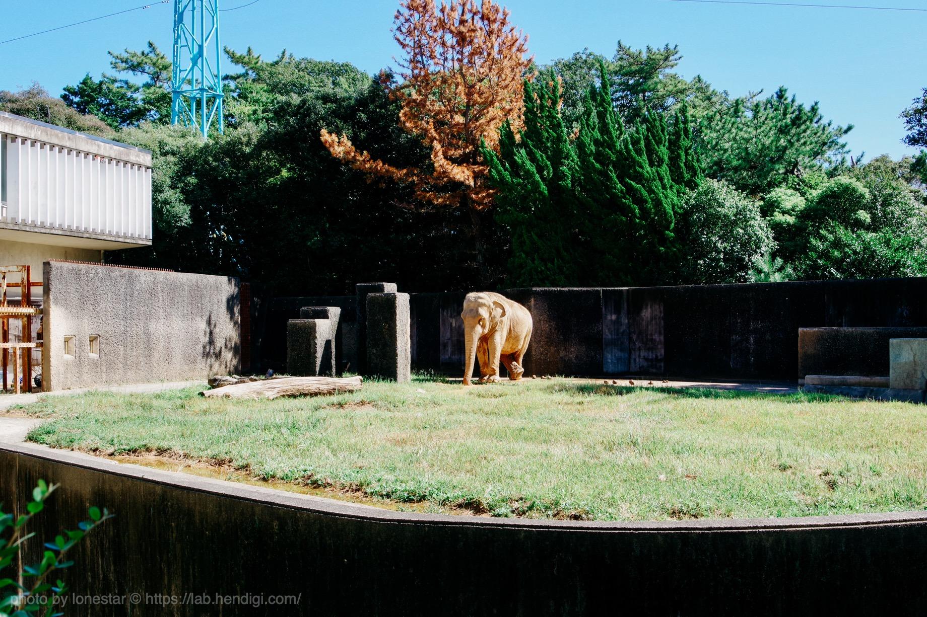 浜松市動物園 ハマコ