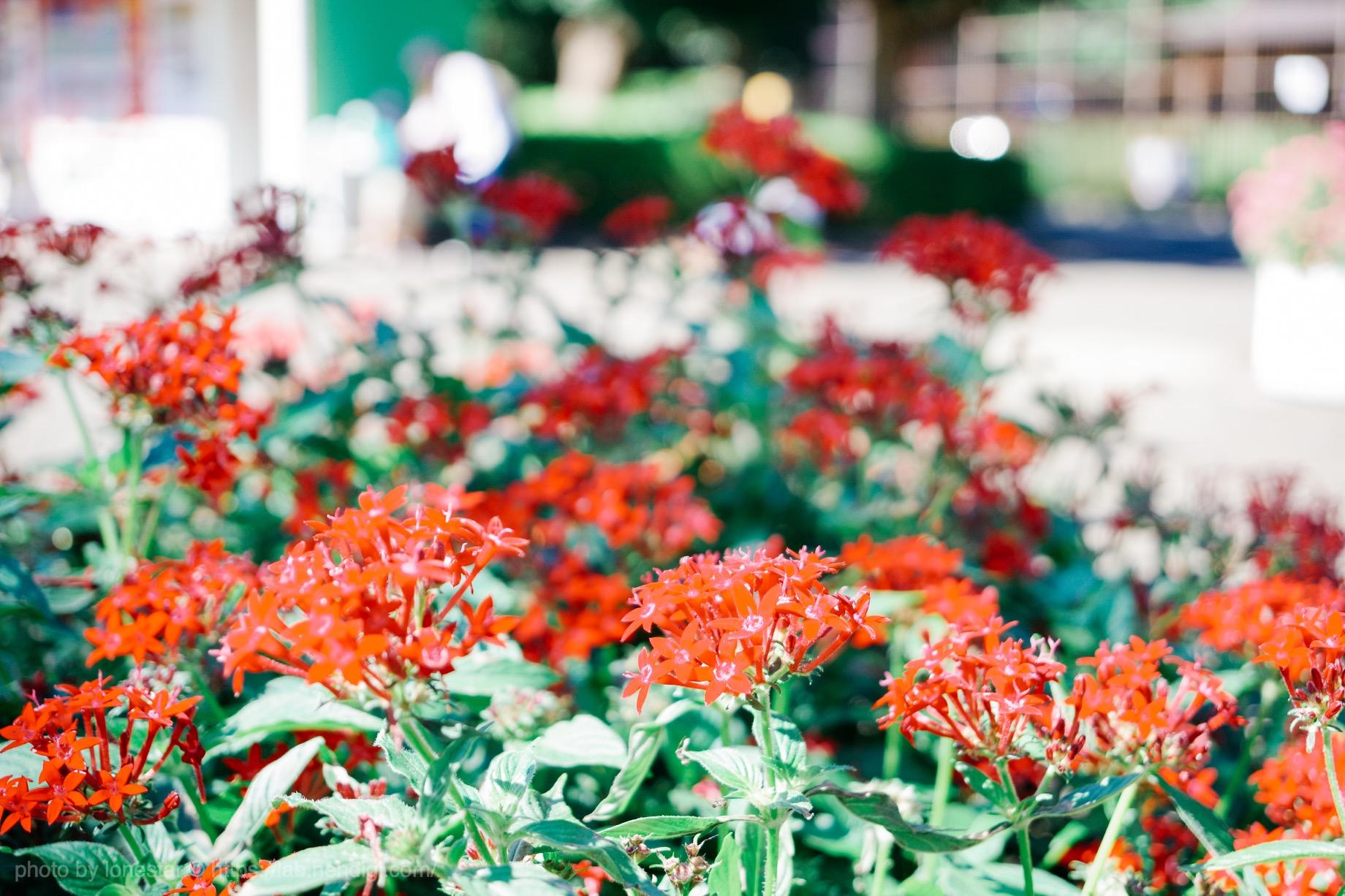 浜松市動物園 花