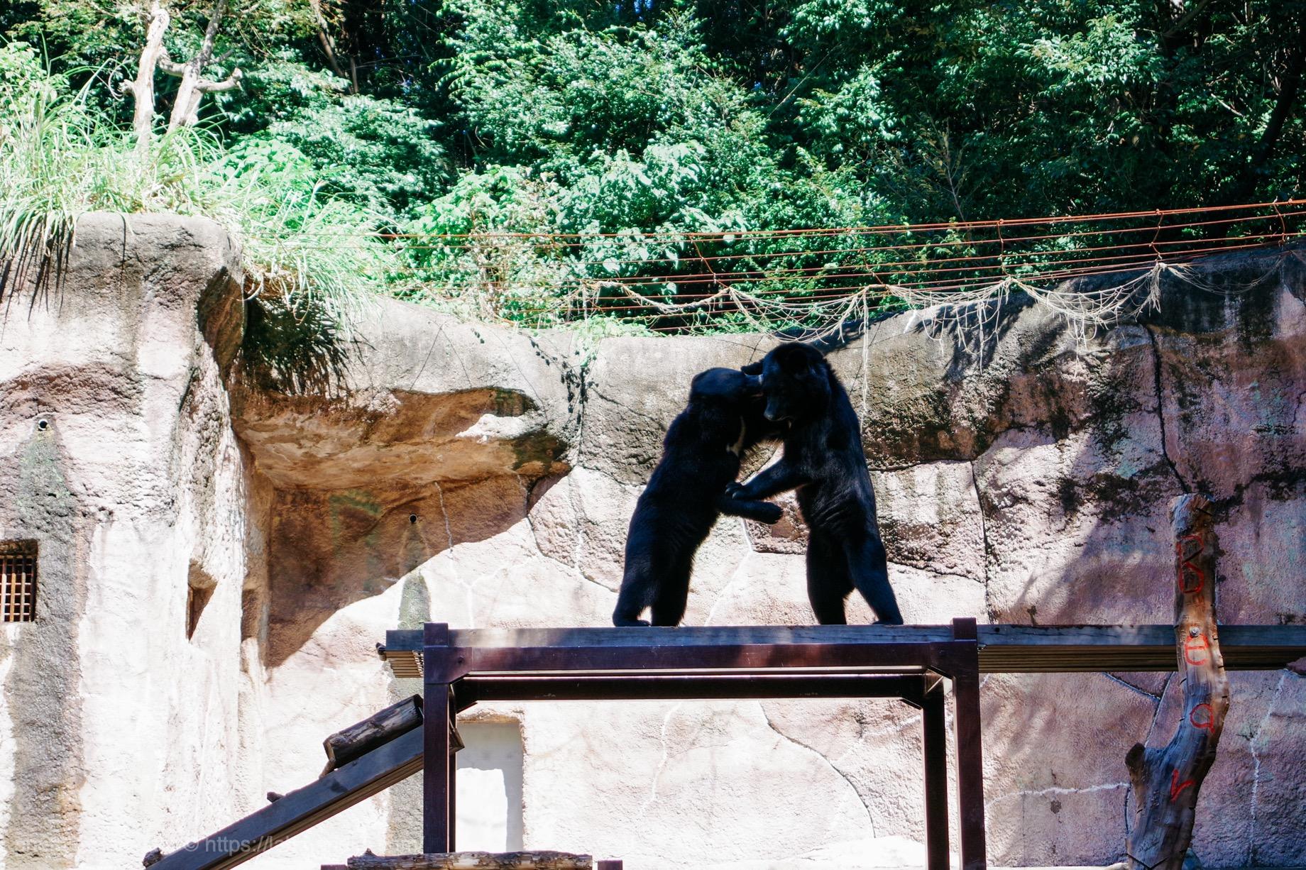 浜松市動物園 ツキノワグマ