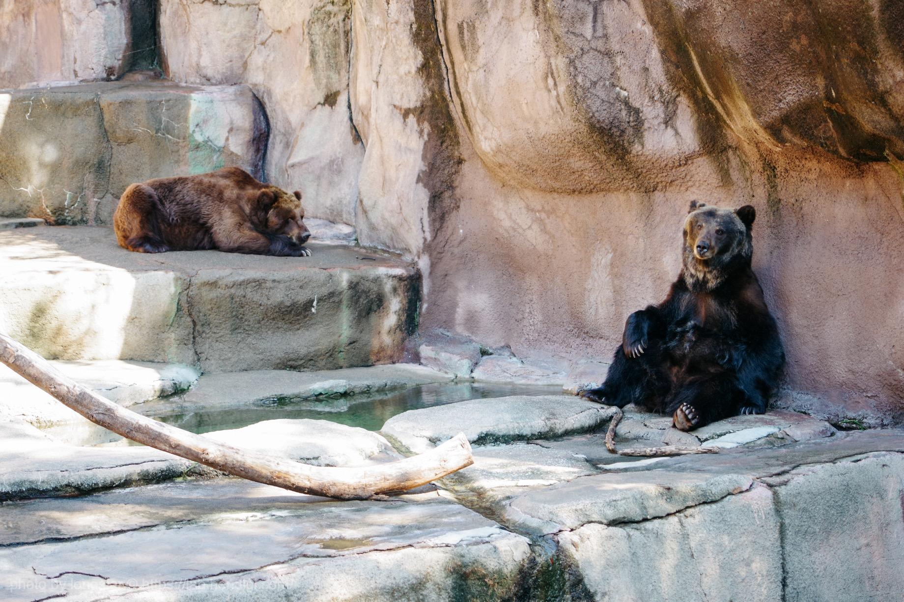 浜松市動物園 ヒグマ