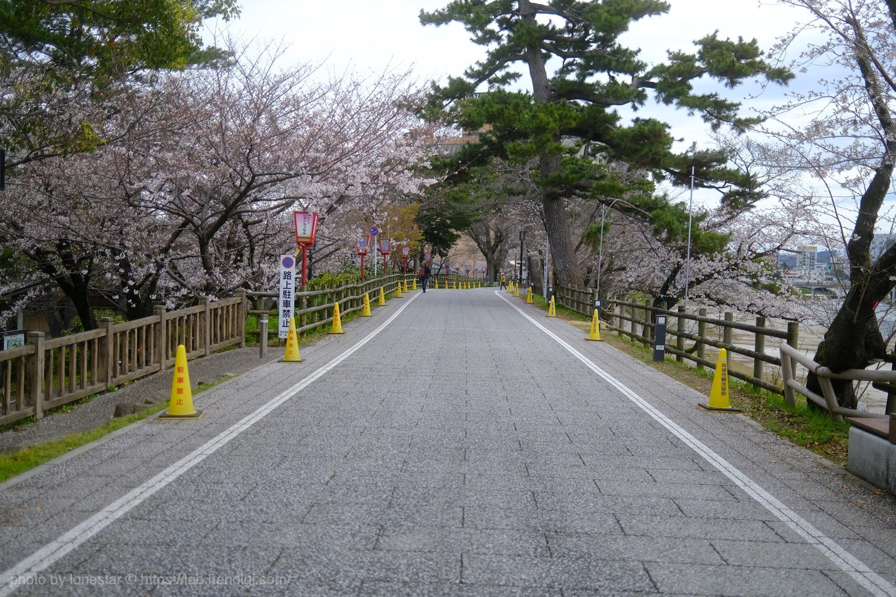 2020年 岡崎市 桜