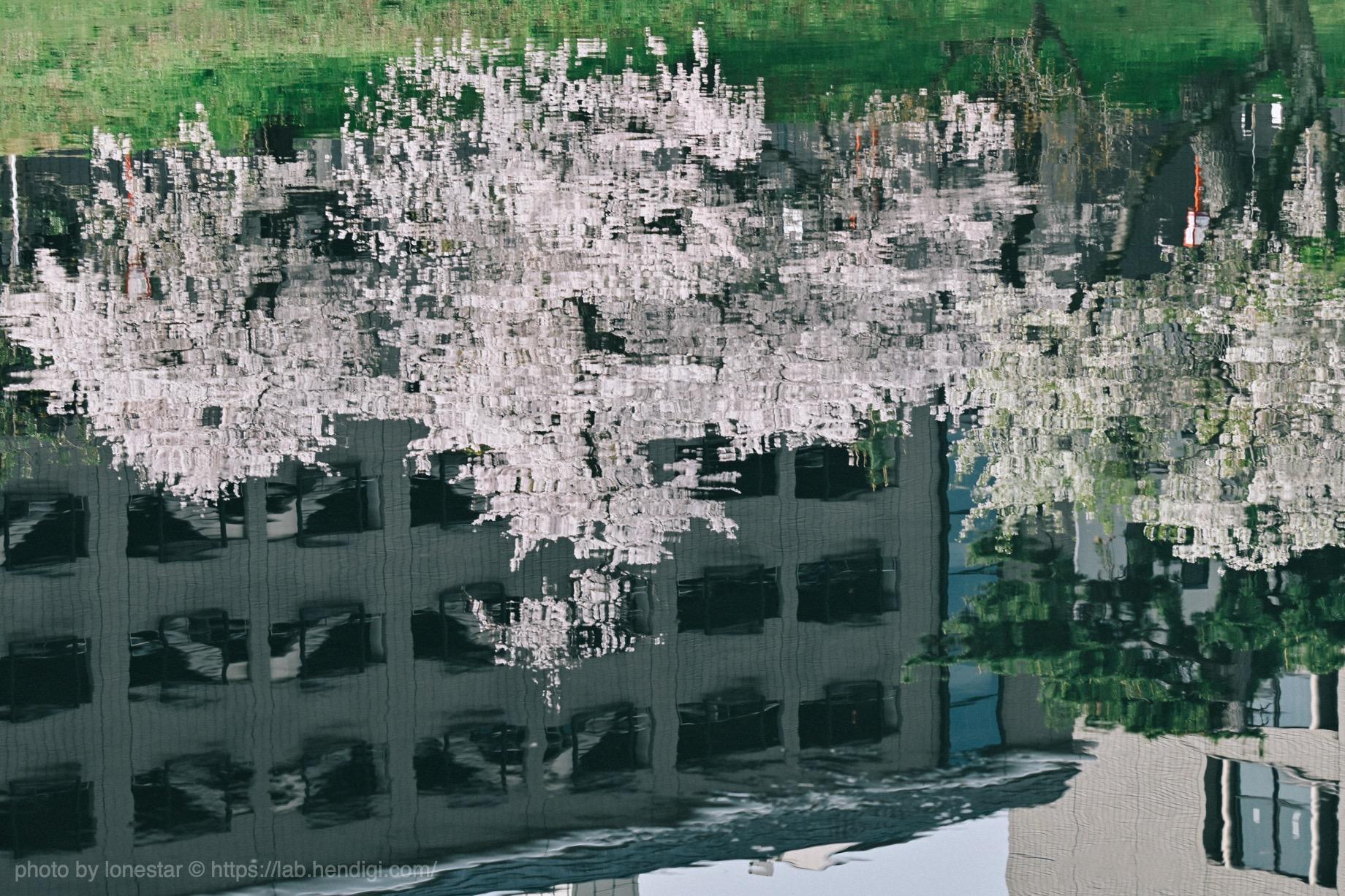 望遠レンズ 桜 2021