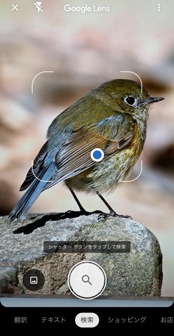 野鳥 画像検索